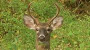 Deer 10-5-13