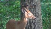 Deer 7-23-13