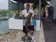 David s42lbCatfish