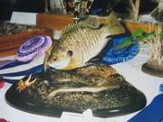 fish 032