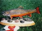 fish 025