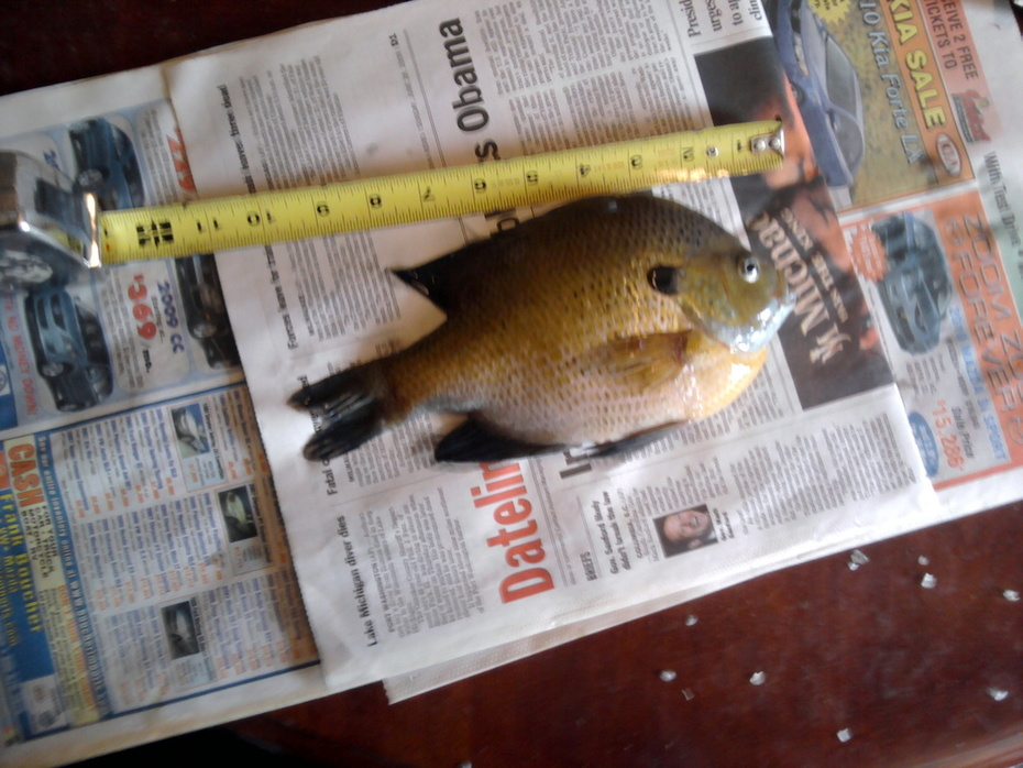 Fish 2010 001