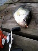 dock panfish
