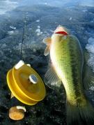 schooley ice reel