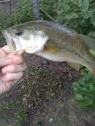 nice bass