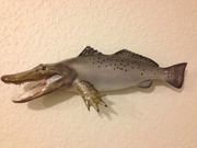 Gator trout