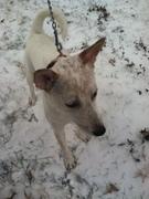 Buddy in snow