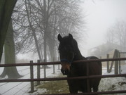 Capricho in the mist :)