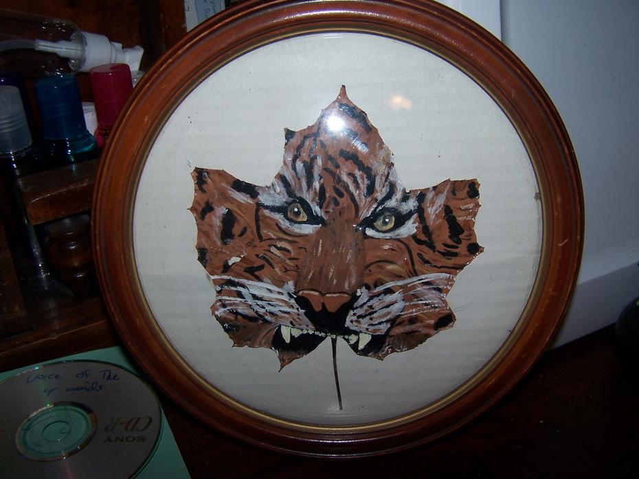 tiger maple