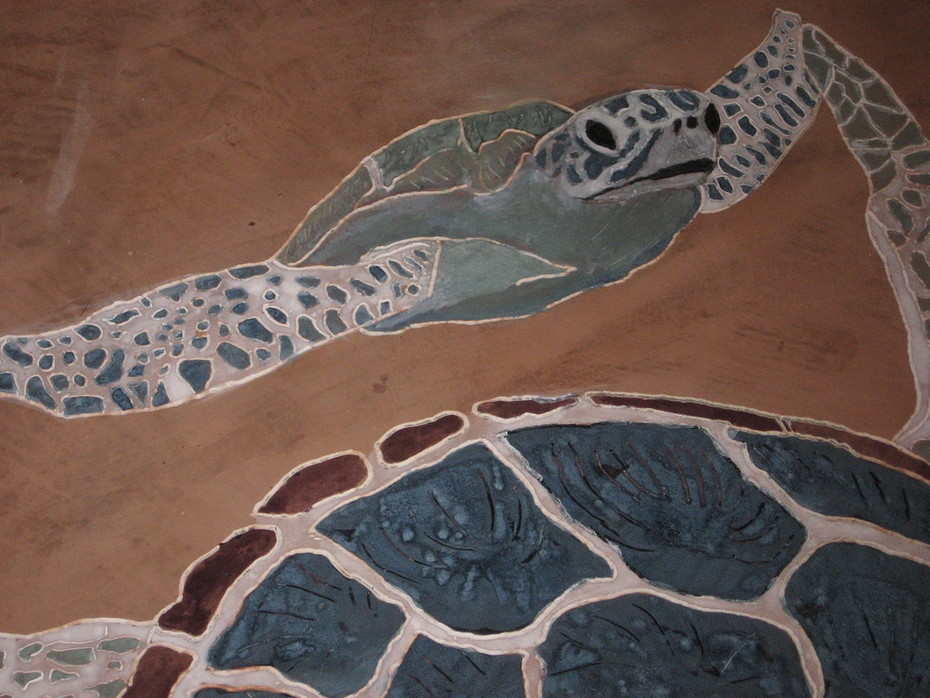 Mother and infant green turtles