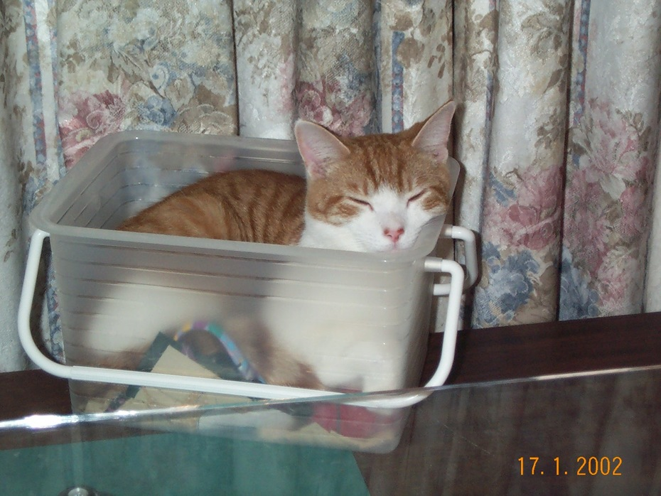 Pumpkin in the Sewing box