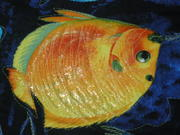 fish on Dad's Hawiian Quilt