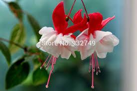 2087036?profile=RESIZE_1024x1024