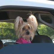 Chrissy Snow Reincarnated as a Dog