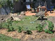Sub Tropical Planting 11/11/07