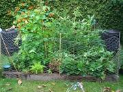 Old flat garden