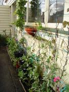 Winter Garden 2010-05