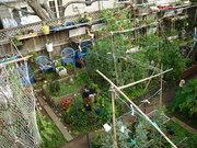 Winter Garden 2010-06