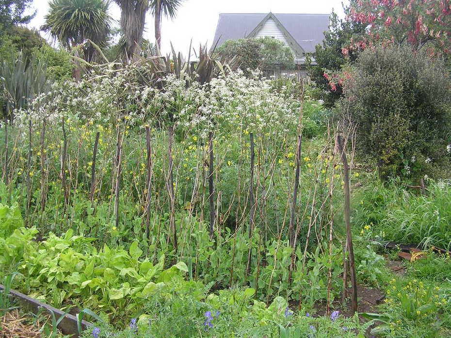 area of raised gardens still useful