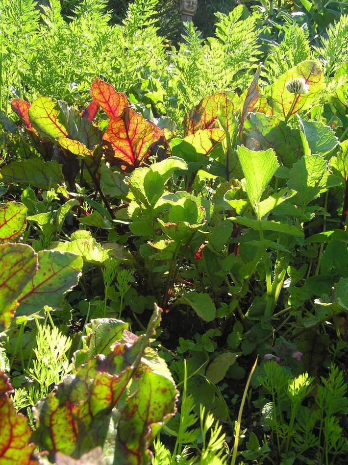 diverity in vege gardens
