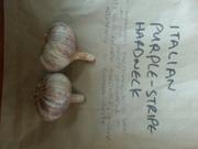 Italian Purple Stripe Garlic
