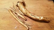 comfrey roots