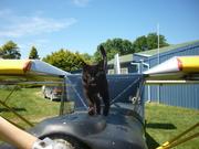 mothy the three legged hanger cat