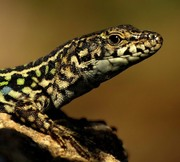 Ζώα και Ερπετά - Animals & Reptiles