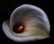 Macro flower No1