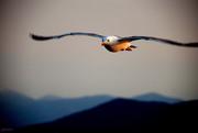 Γλυστρώντας στον αέρα...(swinging in the air)....