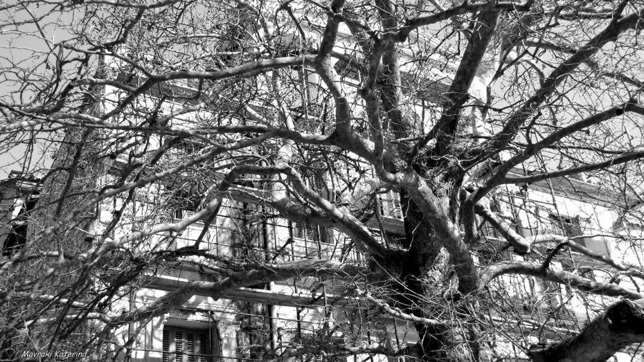 Tree House...!