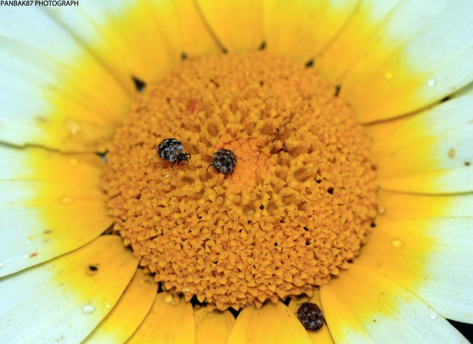 Macro flower #1