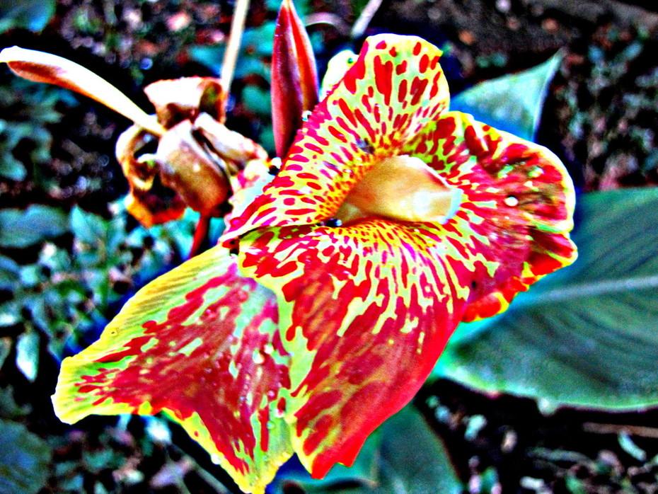 Expressionist flower...!