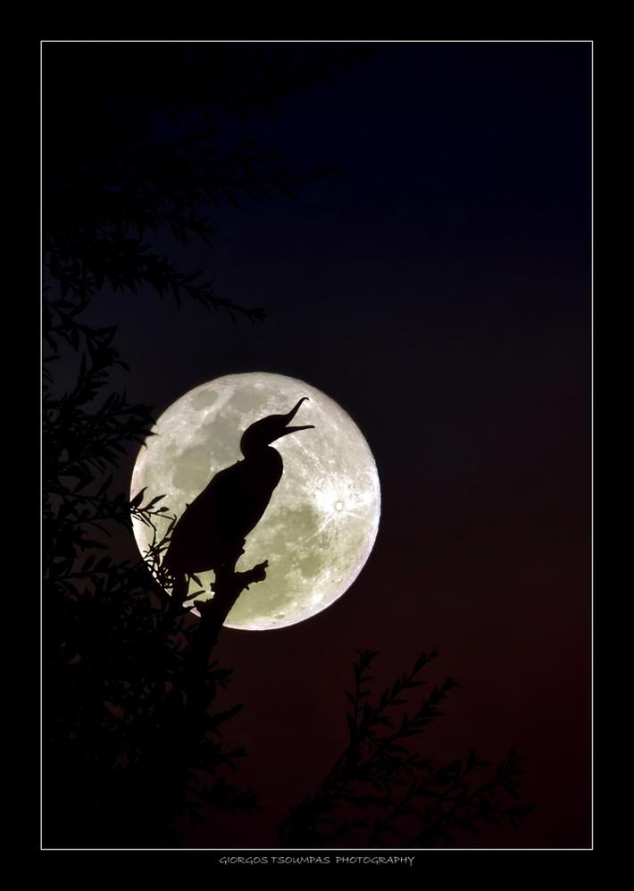 My new moon
