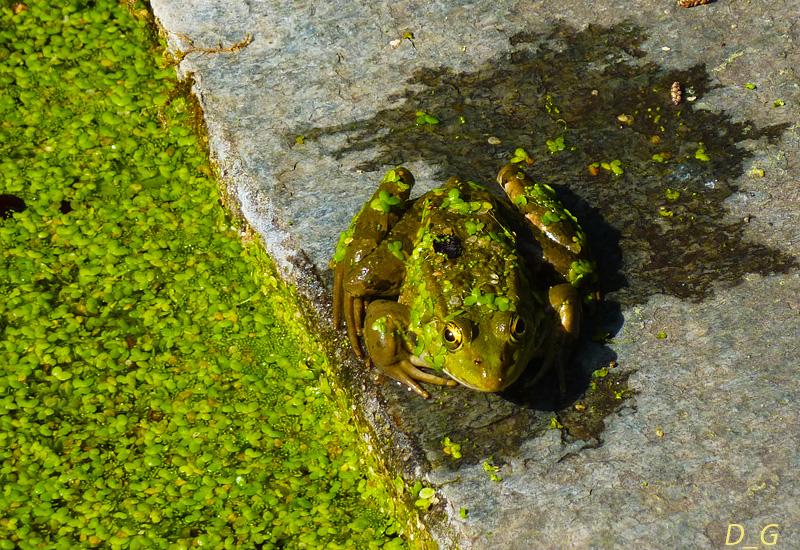 Βάτραχος στον Βοτανικό Κήπο