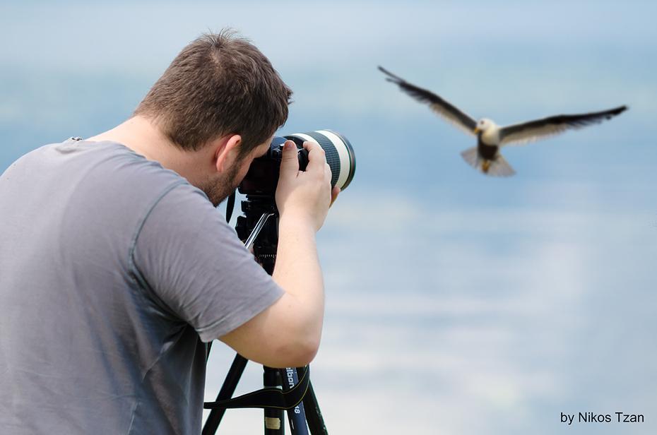 Making a bird portrait