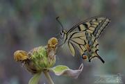 Ζώα- έντομα (2)