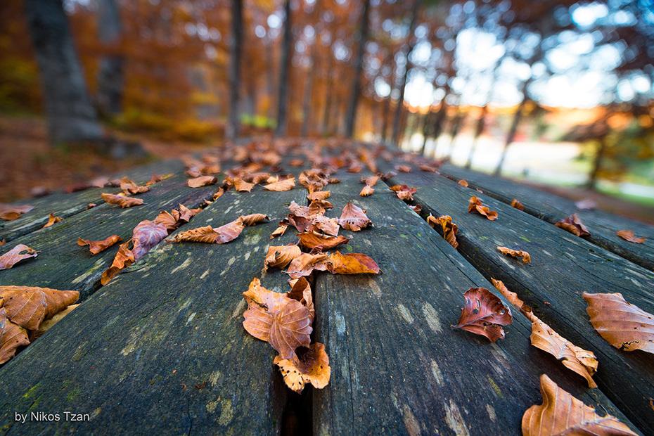 Autumn mood on a bench