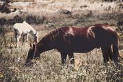 Τα άλογα ομορφαίνουν ένα τοπίο - Alice Walker