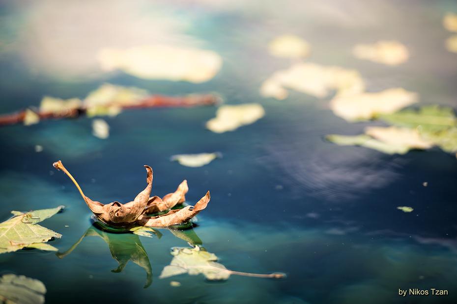 Φθινοπωρινό φύλλο 1