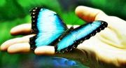 borboleta 01 edit ok