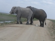 YHA Kenya Travel/Kenya Budget Safaris/ Kenya budget Camping safaris/ Small Group Adventures/ Small Group Safaris/Tours.