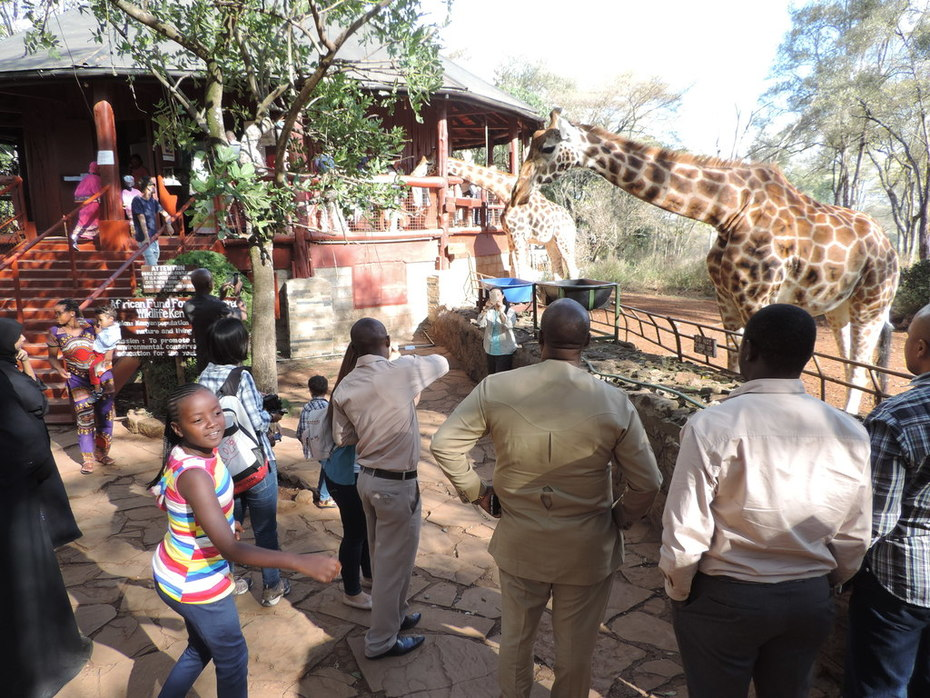 YHA Kenya Travel, Nairobi,Things to see and do in Nairobi, Guided Nairobi tours, Nairobi Sight Seeing tours, Bomas of Kenya, Mamba Village, Day  Excursions, Giraffe Cen (8)