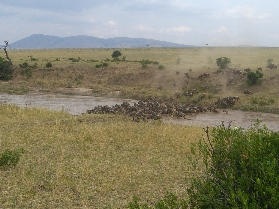 YHA Kenya Travel,Wildebeest migration,Kenya wildebeest migration, Kenya migration safari