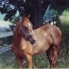 Jay Young raised thoroughbred race horses in the late 90's