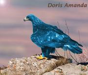 DorisAmandav