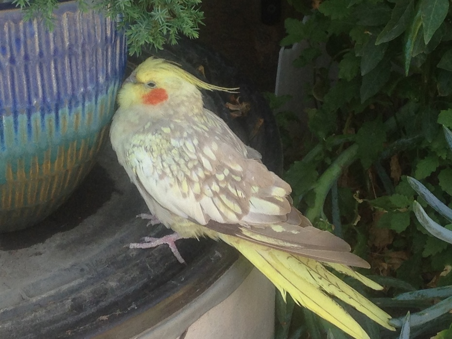 A parrot I let free