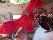 Eulensocken in Rot