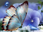 mariposa y flor lila