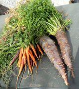 Zanahorias grandes